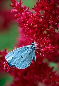 sapphire73 - Azure Visitor
